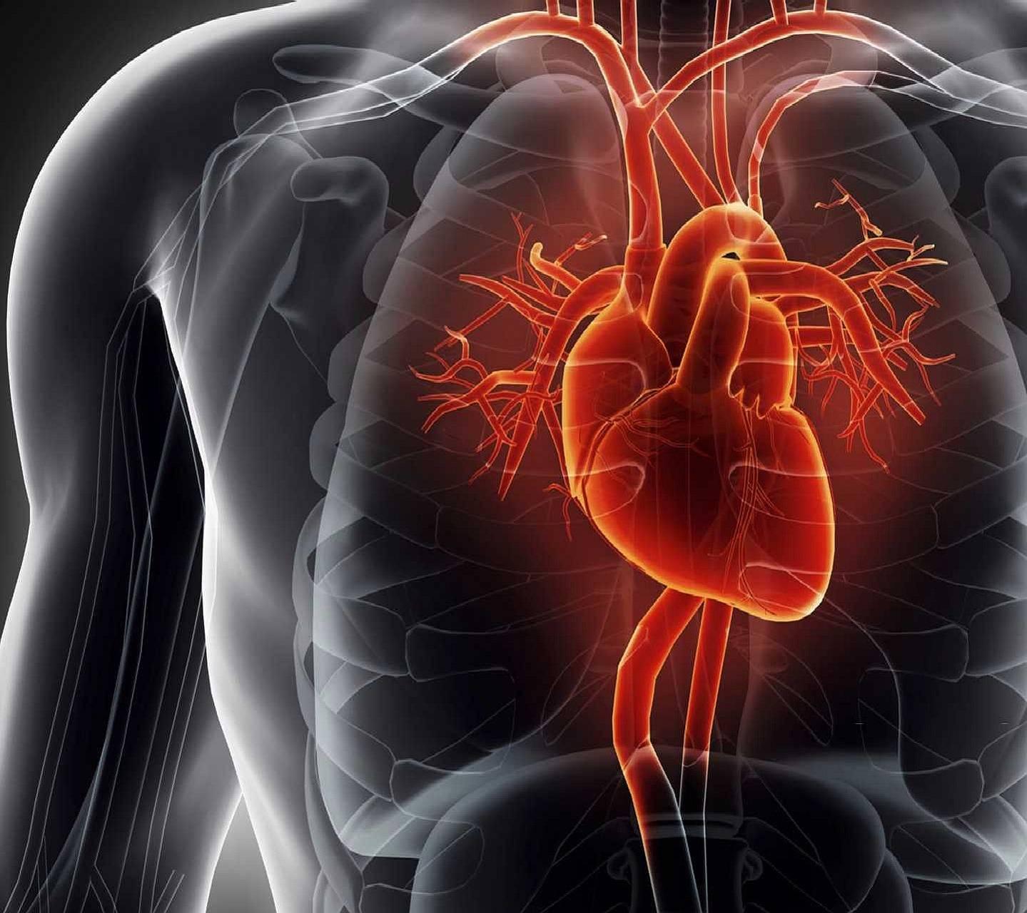 heart----------