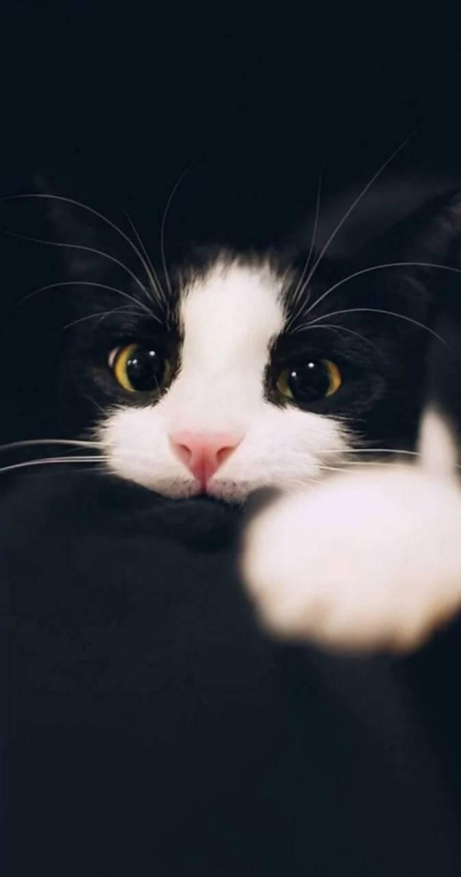 Big eye cat