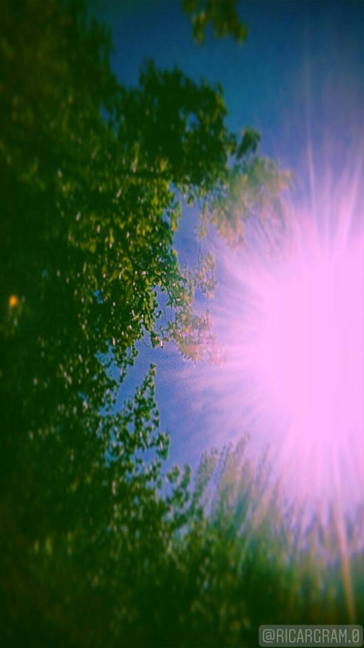 Sun Pink