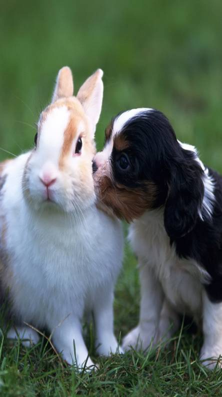 Puppy Perfect Kiss
