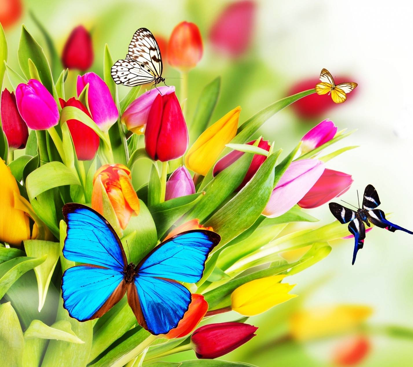 Butterflies Hd Wallpaper By Mr_LazY_