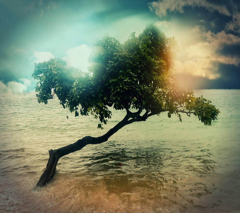 Sea Tree Hd