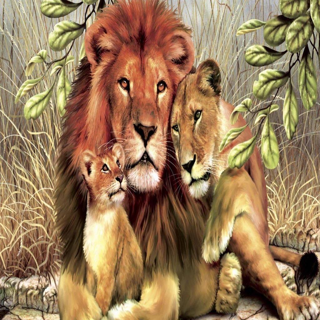 3 Animals Lion