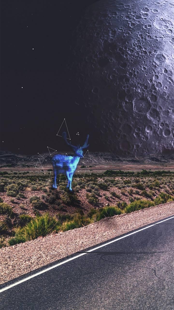 Holographic Deer