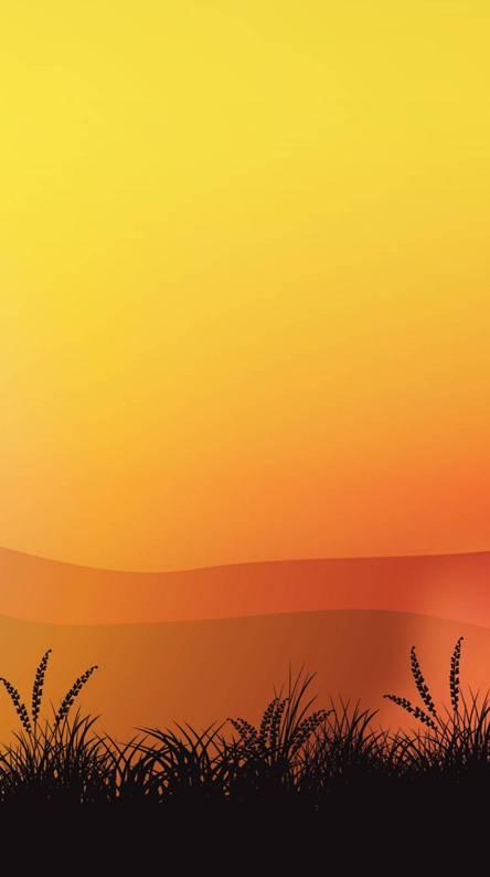 Orange Fields