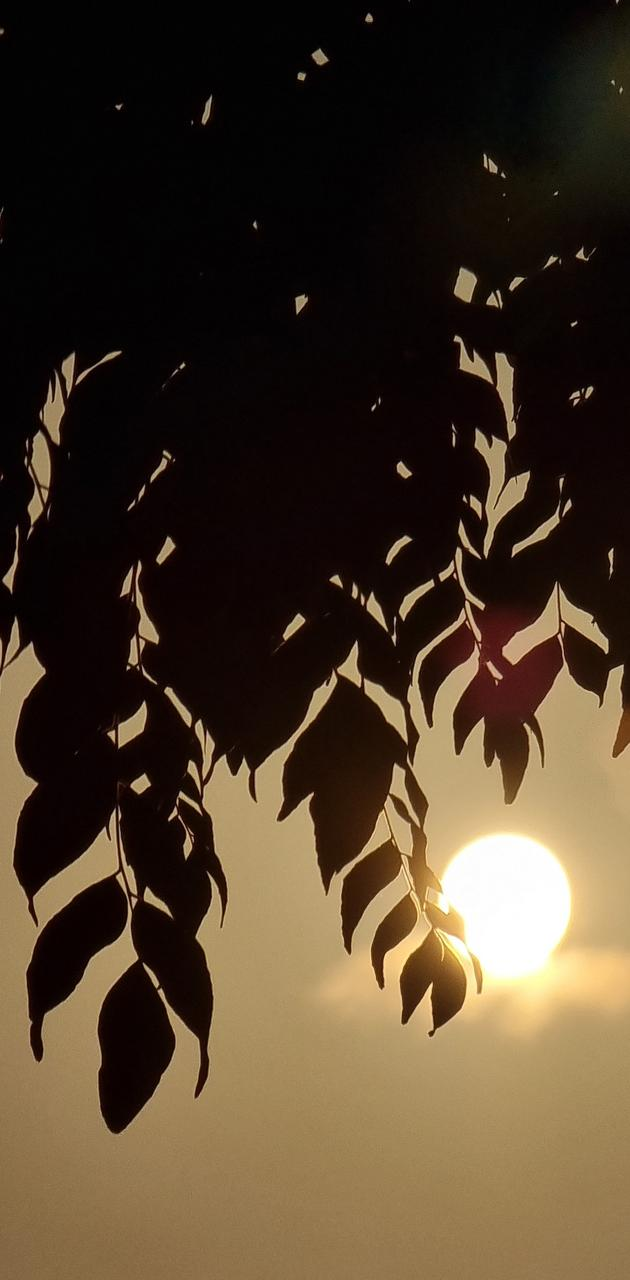 Sunset with leafs