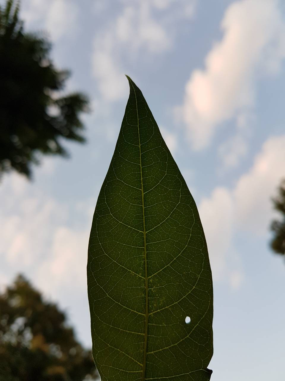 Leaf and the sky