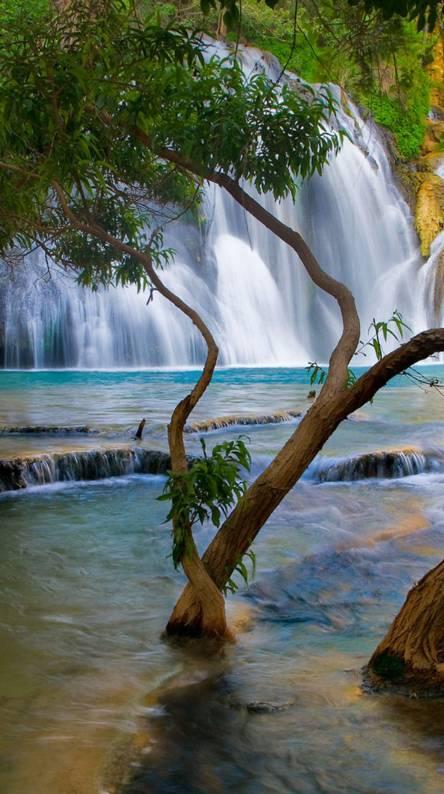 Trees N Waterfall