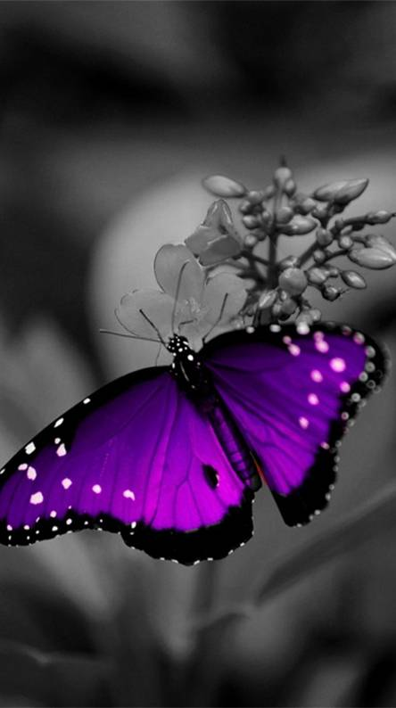 Purple Wallpapers Free By Zedge