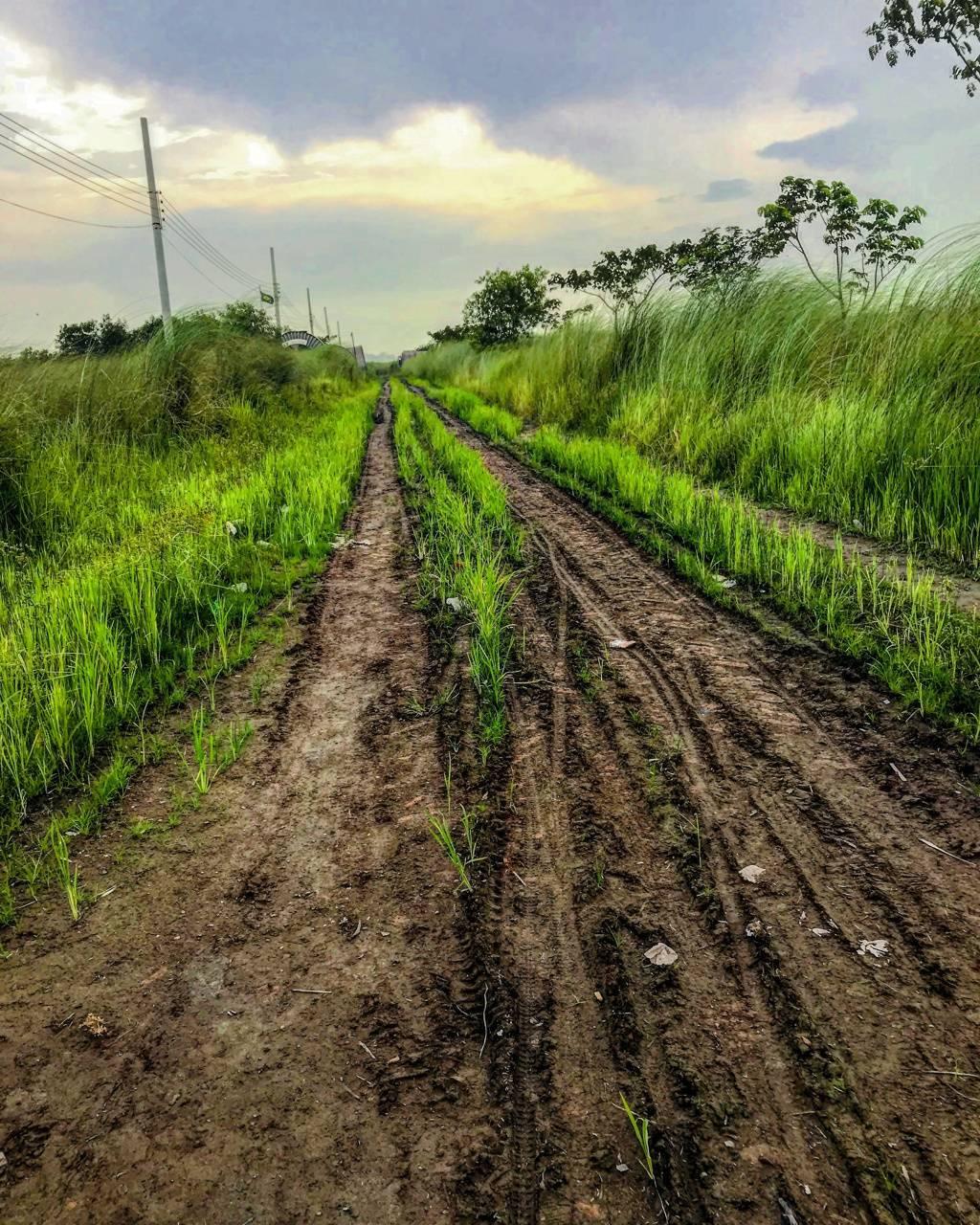 Beautiful road bd