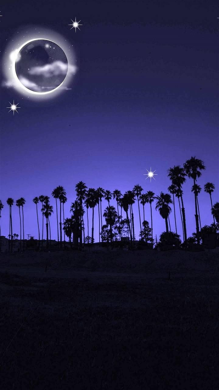 Palmtree night
