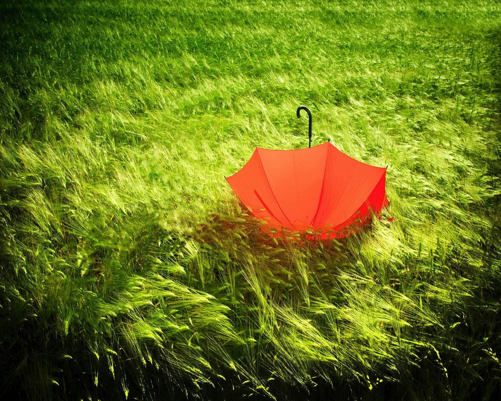 Lonely Umbrella