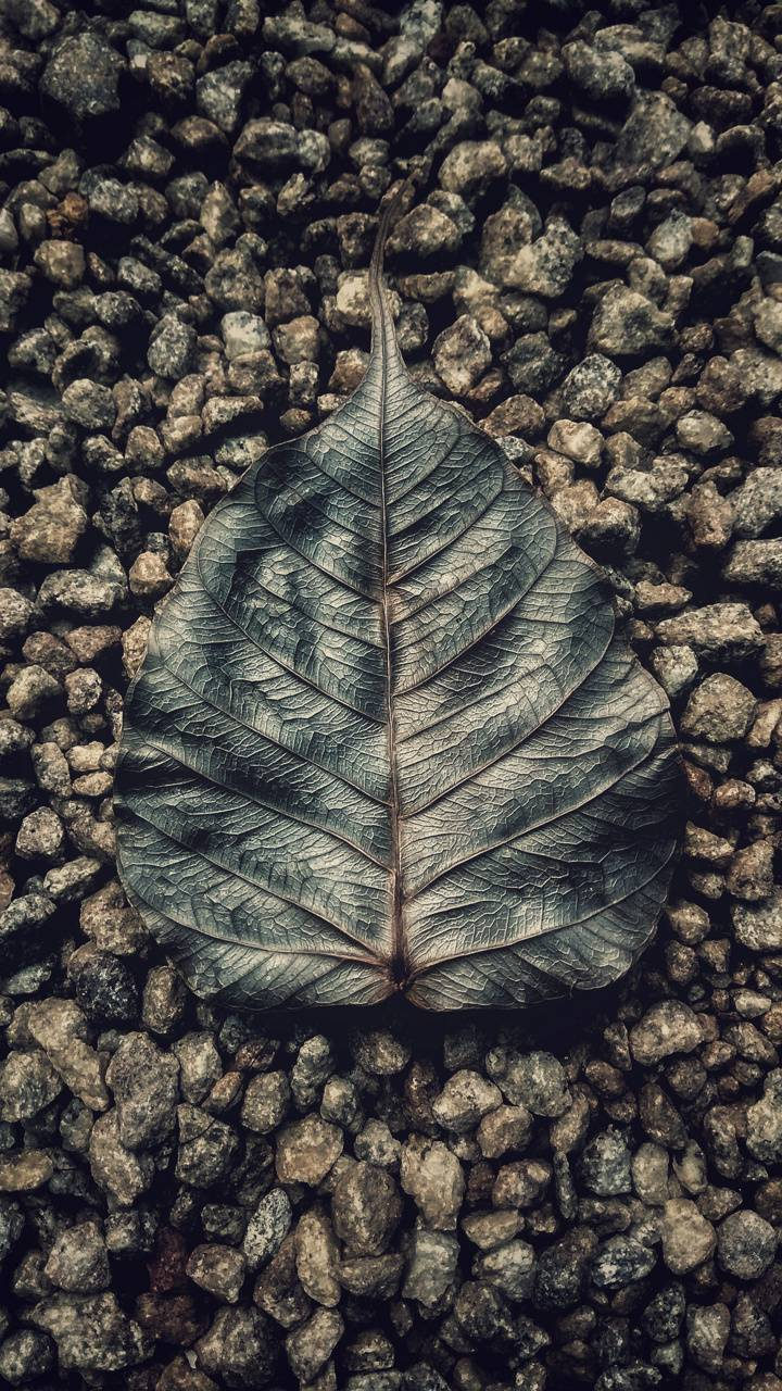 Soul of the leaf