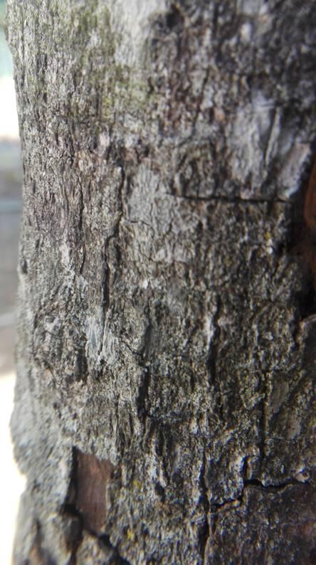 Treeptime