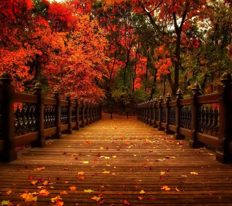 Autumn Nature Park