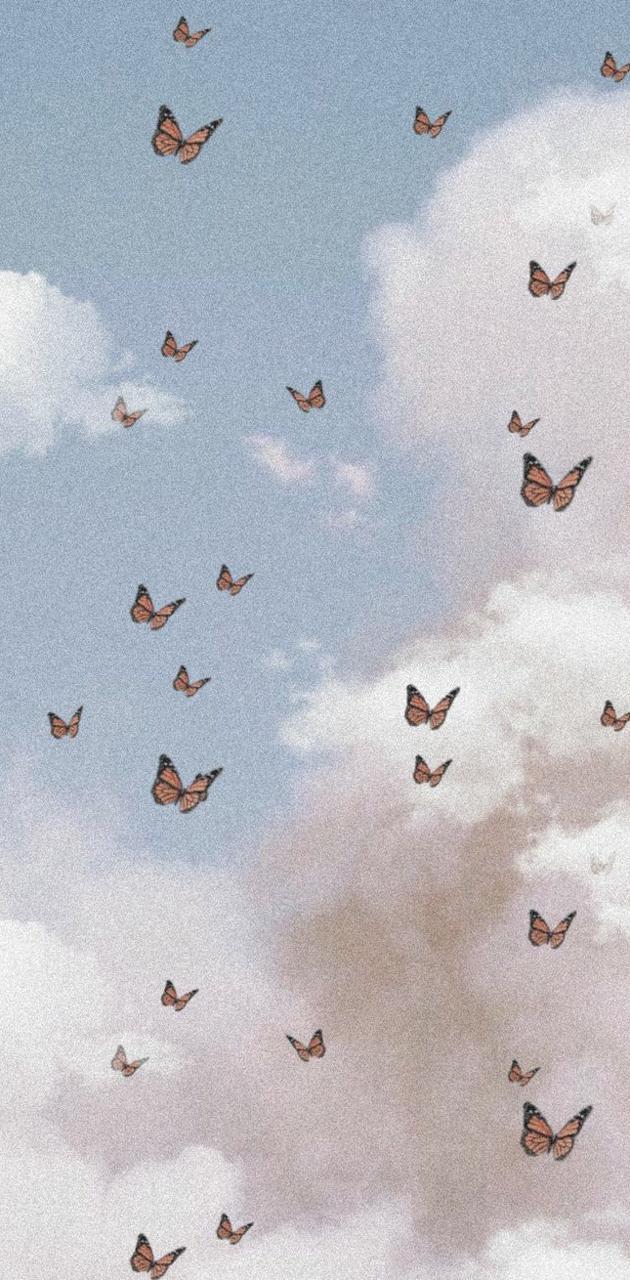 Butterfly aesthetic