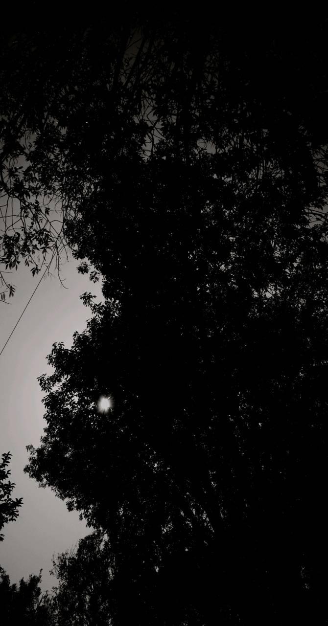 Noches
