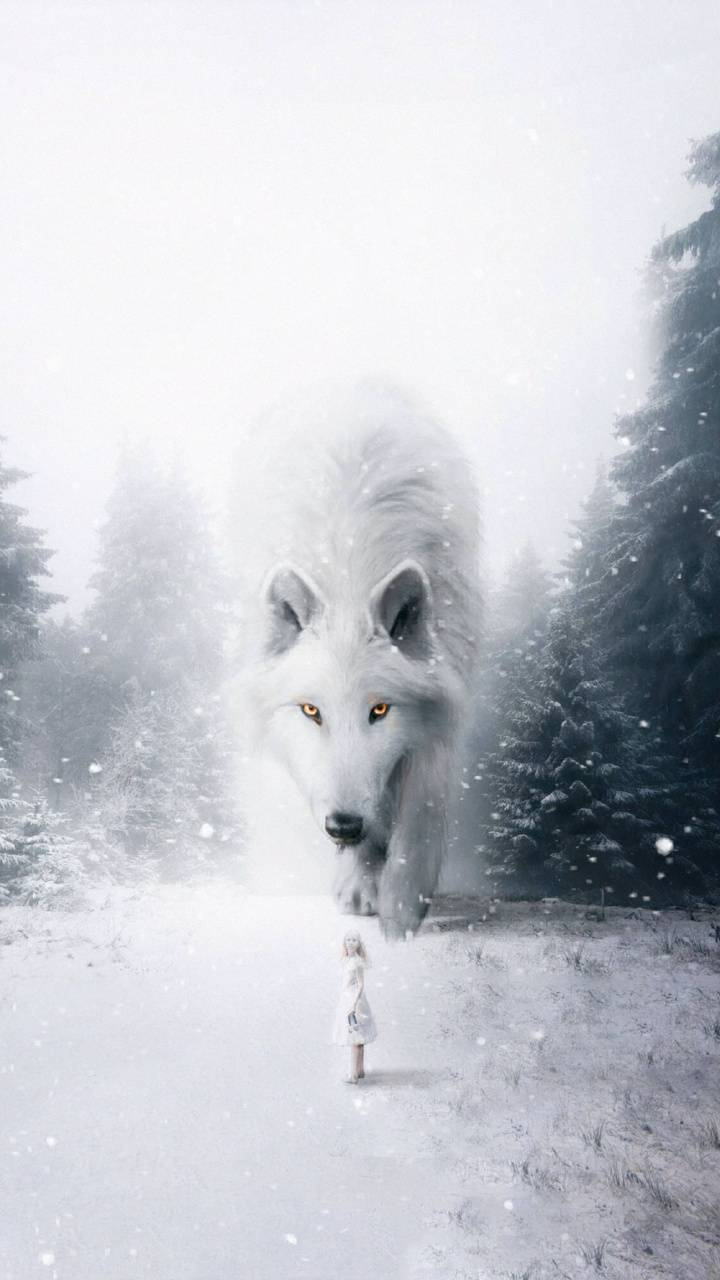White Wolf Wallpaper By Georgekev 08 Free On Zedge