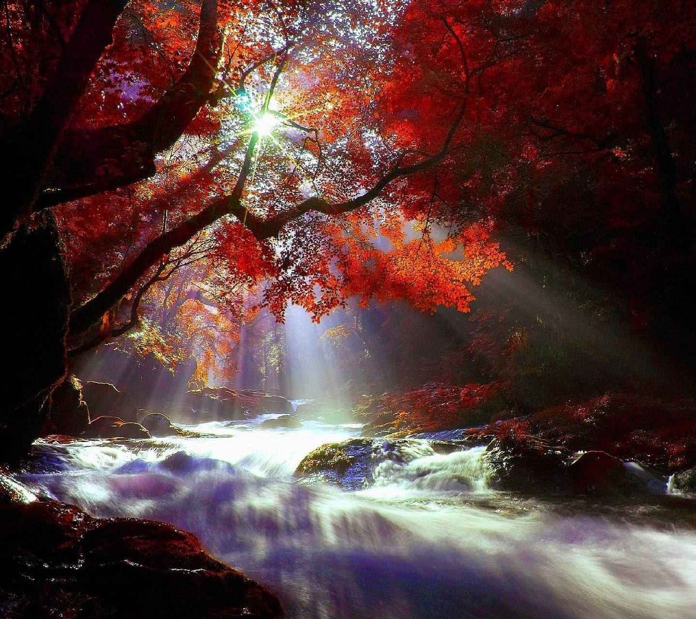 nature---------