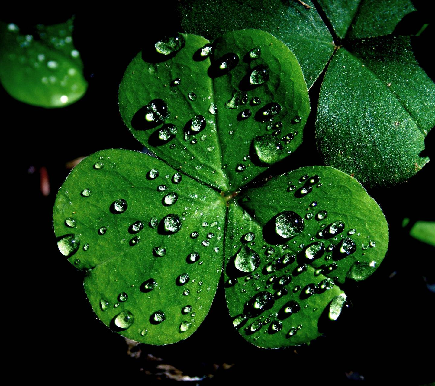 Dewy Clover Wallpaper By Paganuploads 2c Free On Zedge