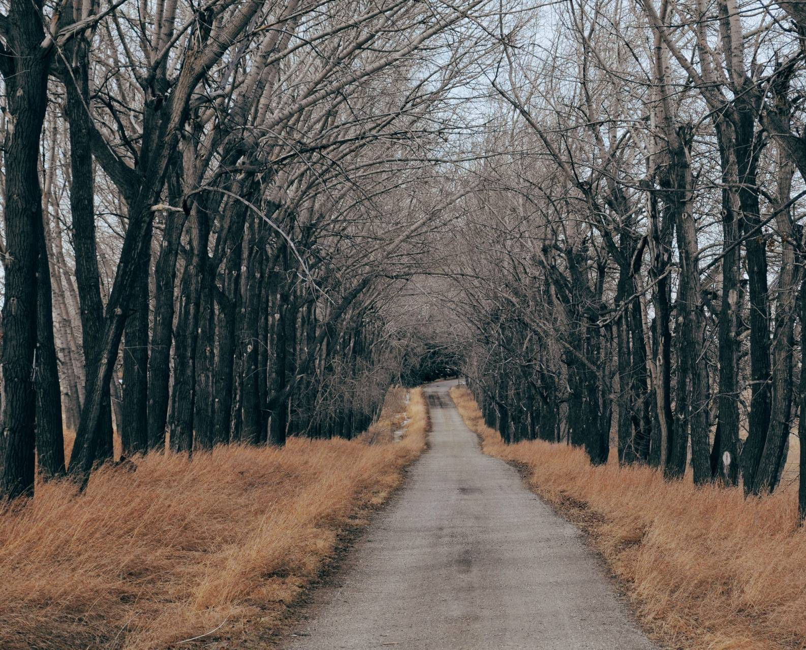 trees along