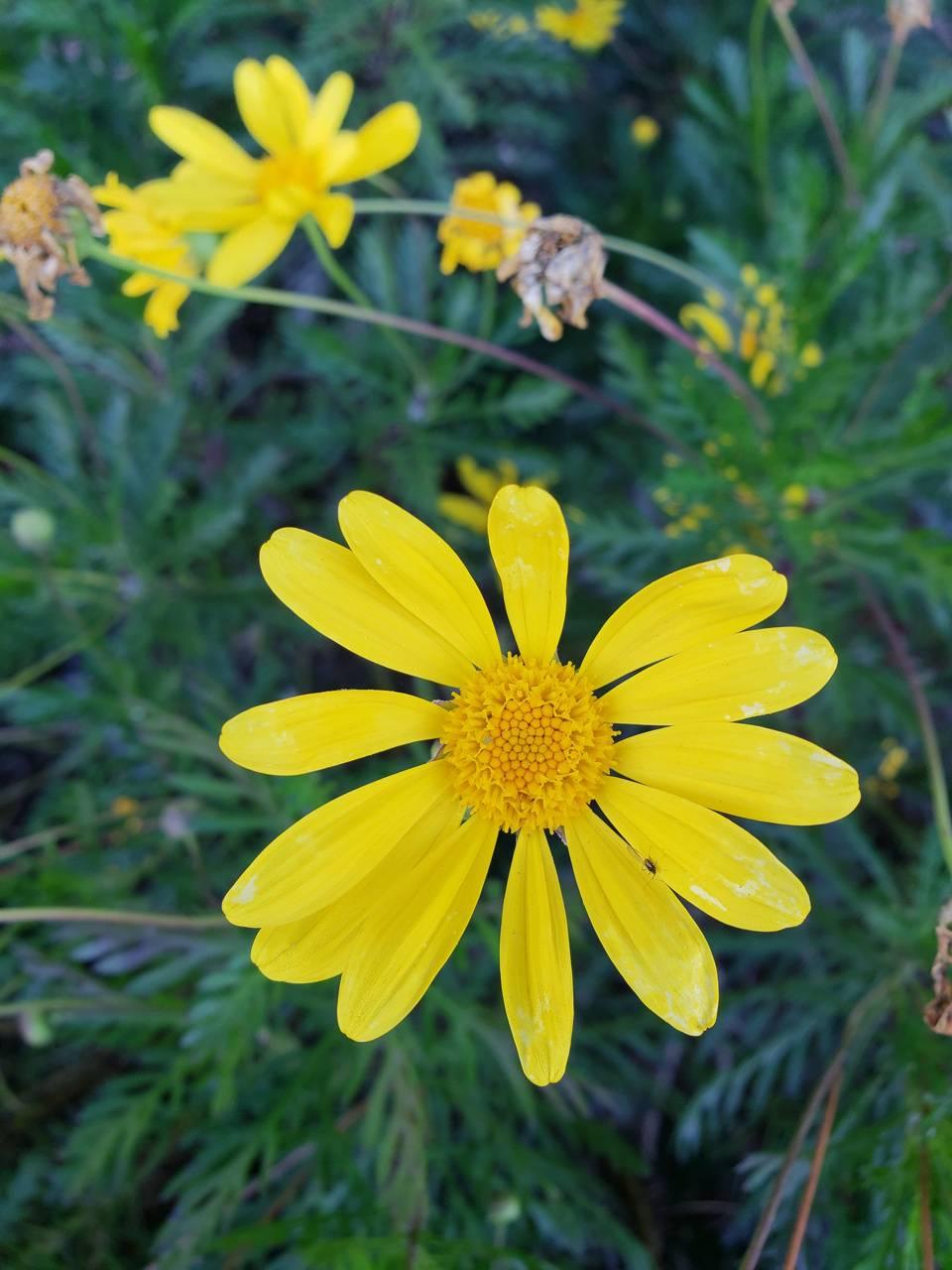 Prety flower