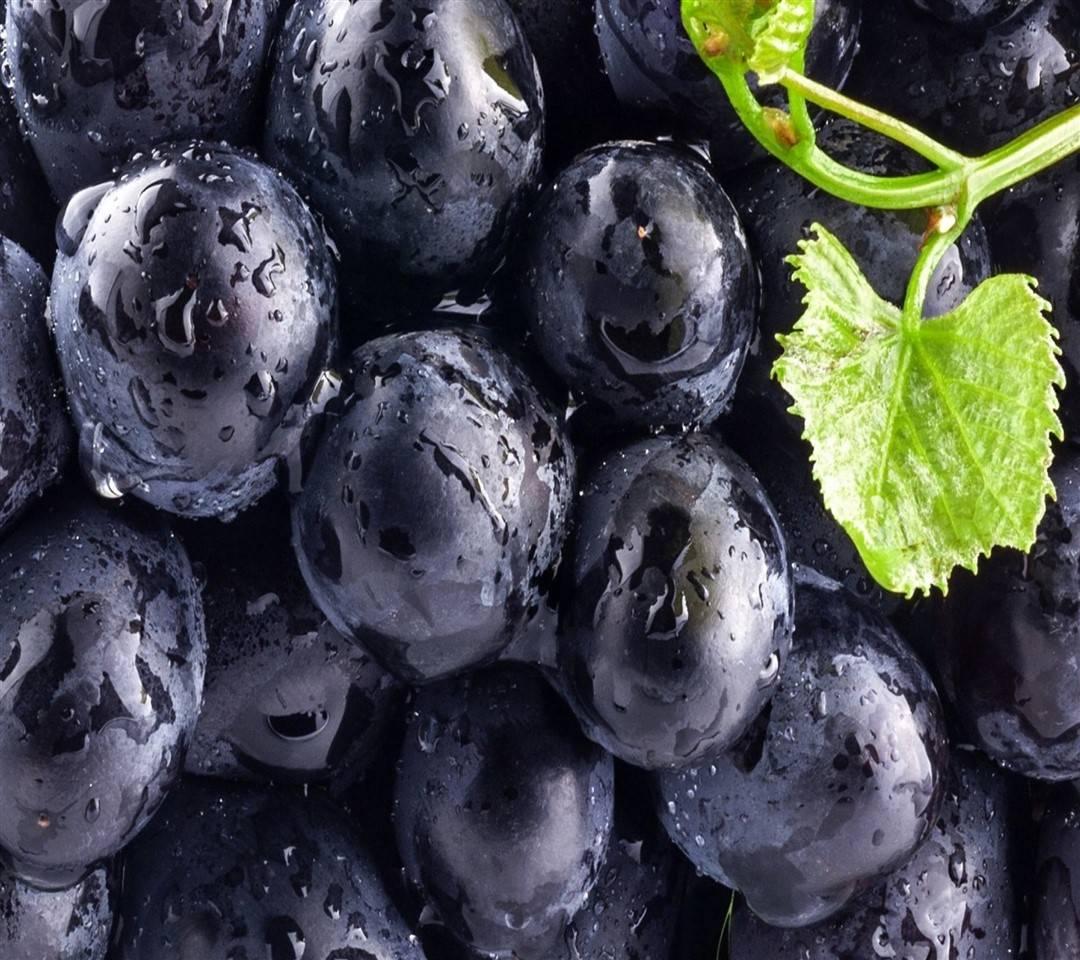 Fresh Blue grapes