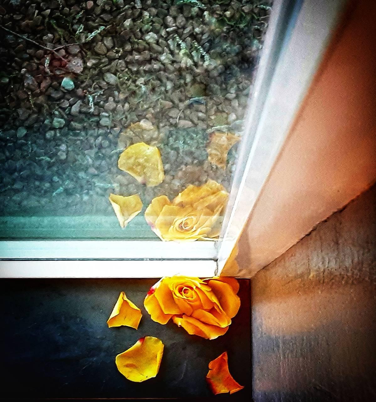 Rose doublganger
