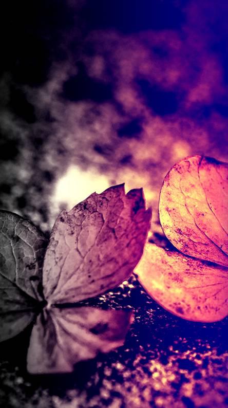 Captivating Autumn