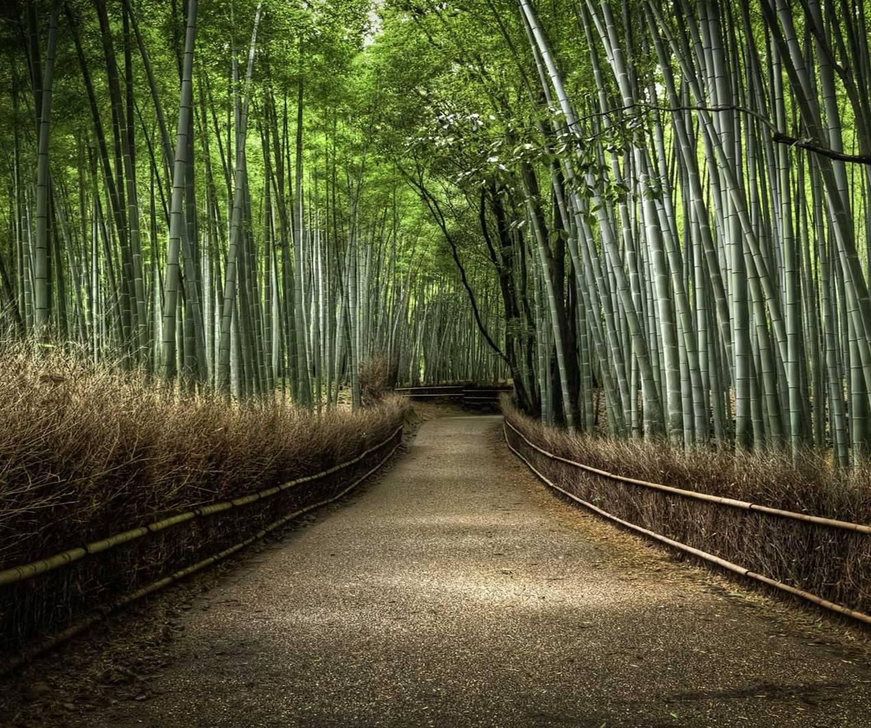 Bambus Path
