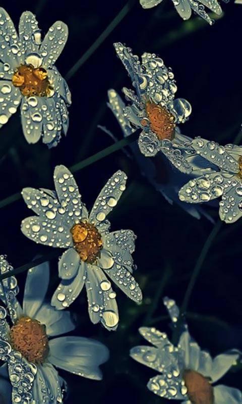water drops flower