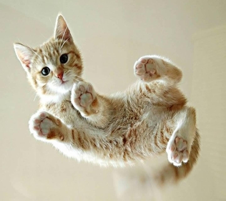 Cute Cat Wallpaper By _Yuva_