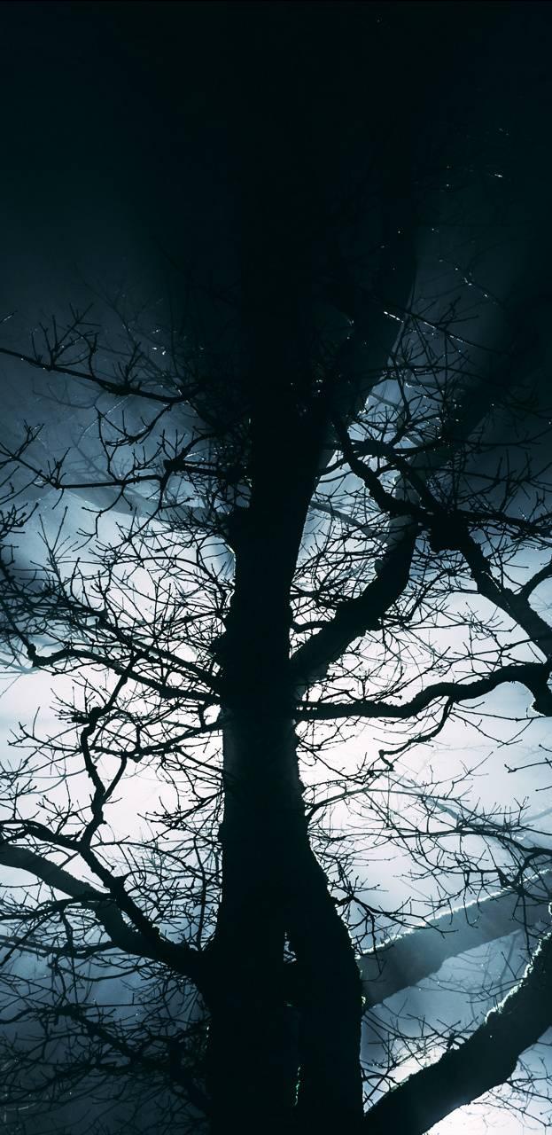 Tree Fog 4k