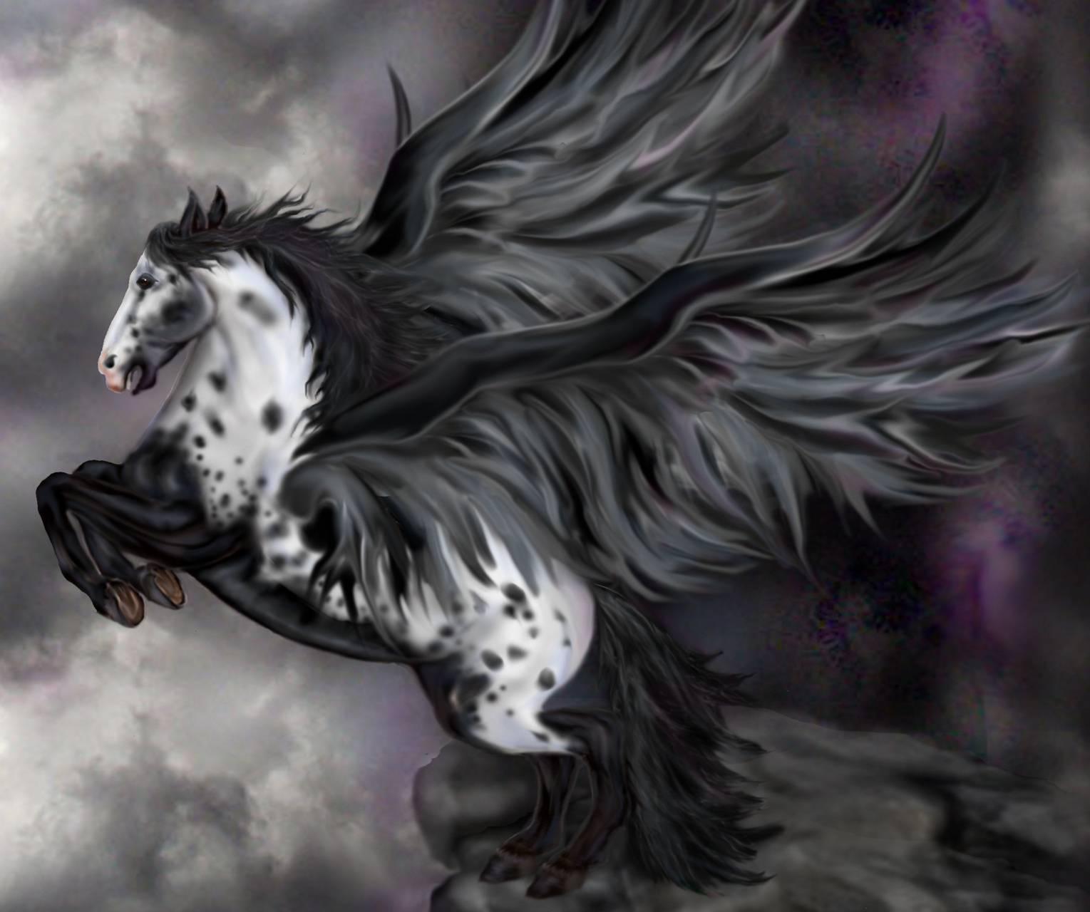 Blk Fantasy Pegasus