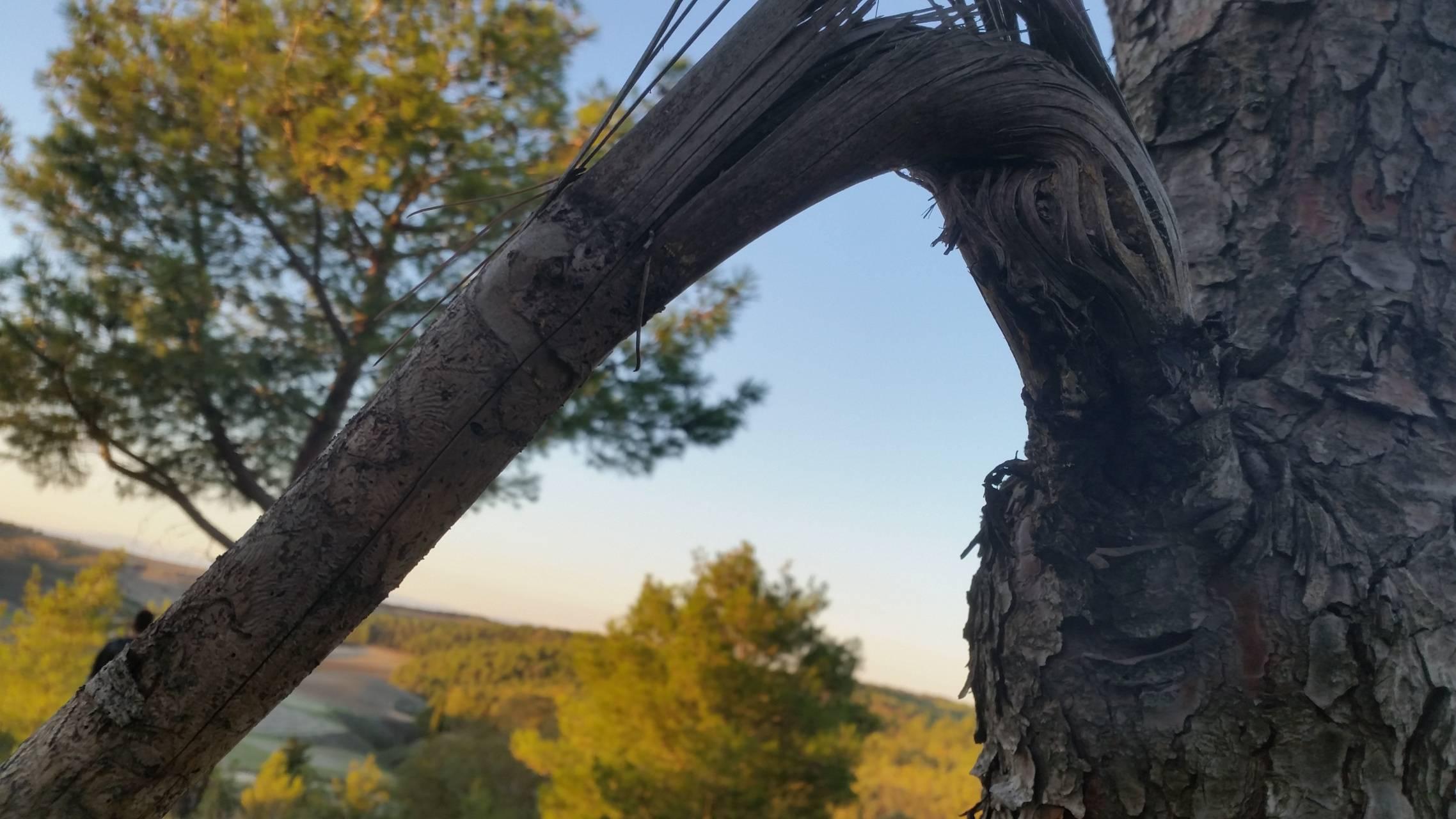 Nature Sicilian