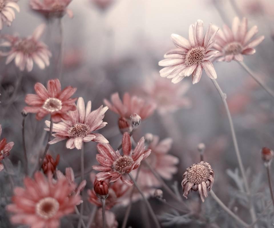 Blumentopfbeet