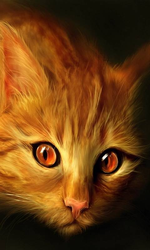 Ginger Cat Wallpaper By Mishu Ce Free On Zedge