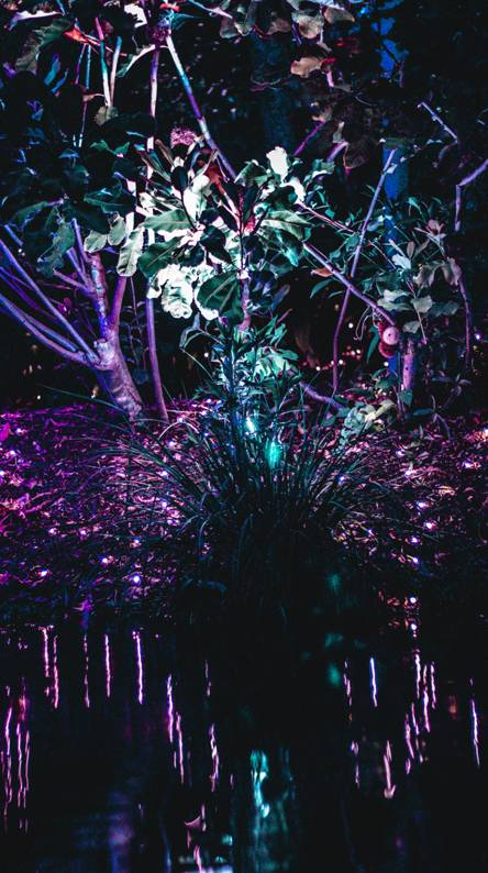 Exotic Plant Light