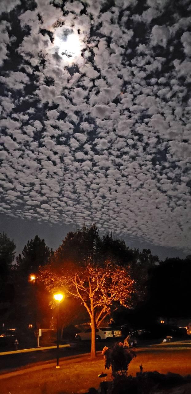 Flocking clouds