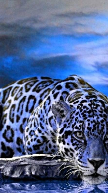 Blue jaguar cat