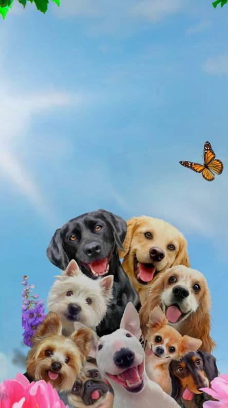 Dogs Selfie