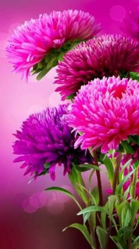 Beautiful Flower Hd Wallpapers Free By Zedge