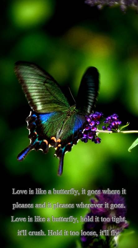 Like Butterfly