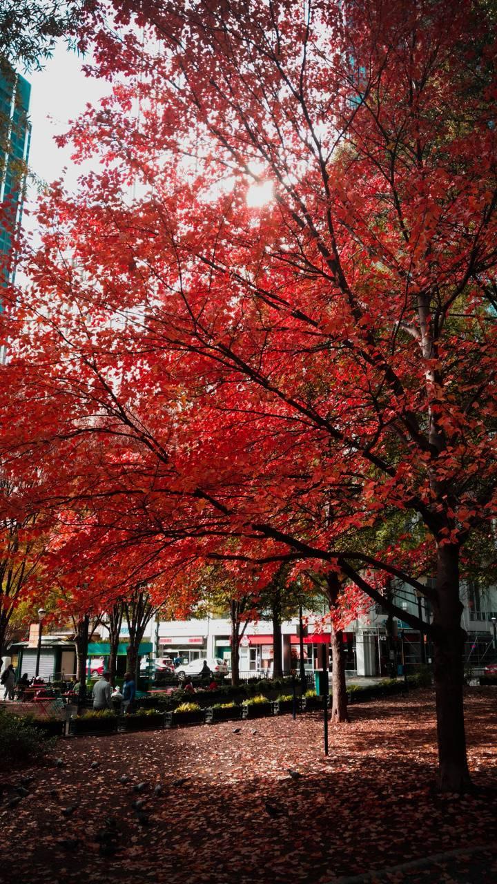 Georgia Fall Colours