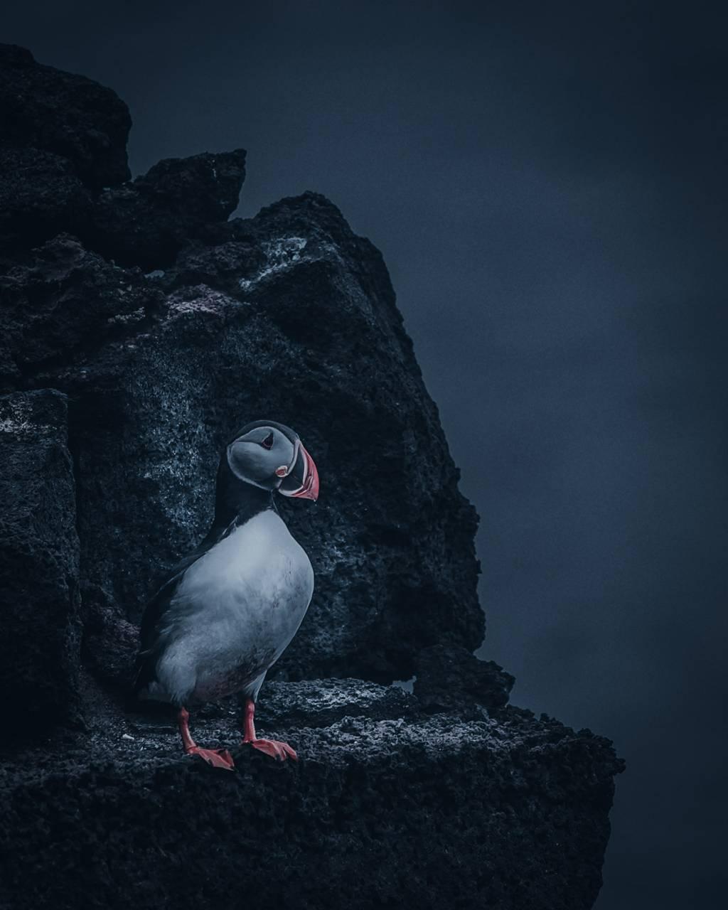 DarkLxkkgram 2 Bird