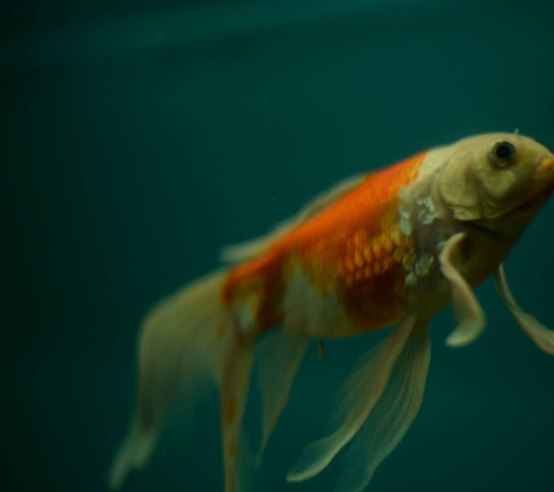Fish Beauty