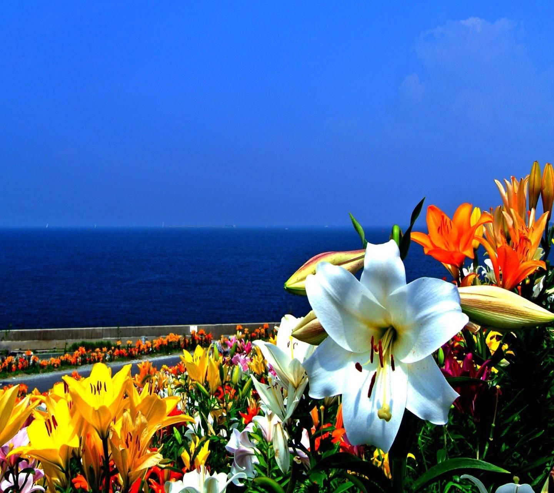 Summer Blossoms