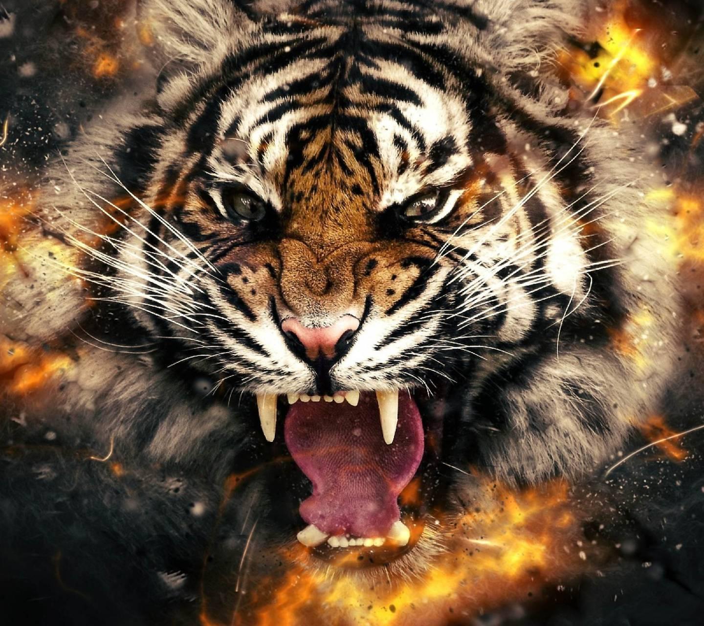 Explode Tiger