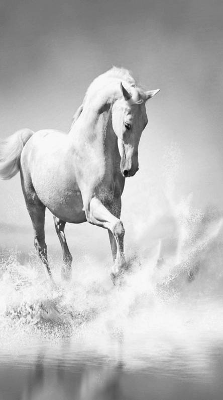 White Horse Wallpapers Free By Zedge