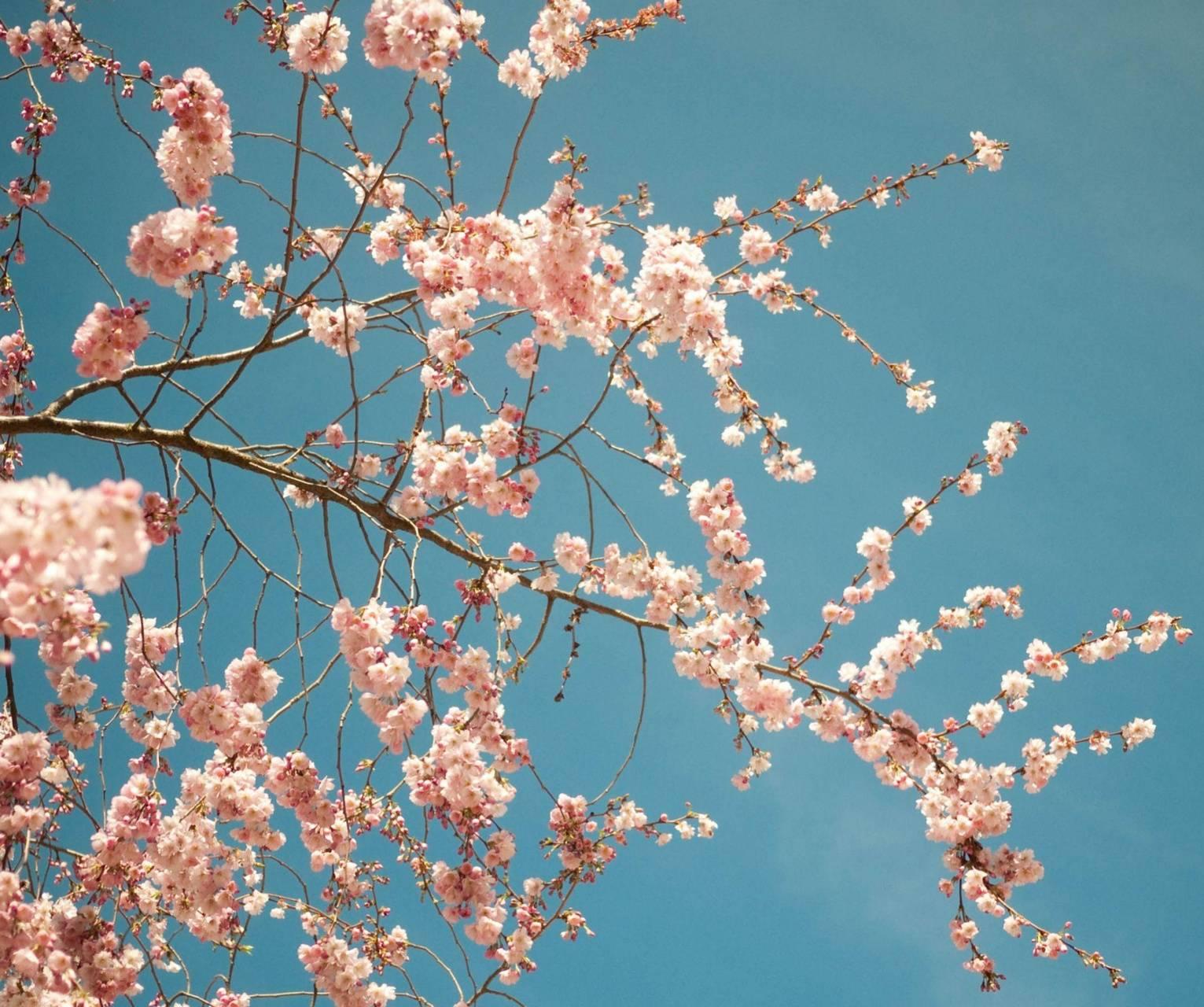 Blossome